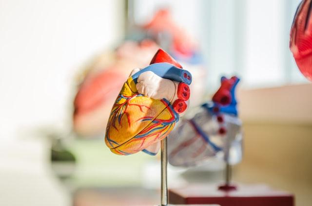 La Vitamine D Pour La Forme Physique, La Santé Cardiovasculaire Et Métabolique